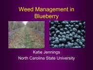 Weed Management in Blueberry