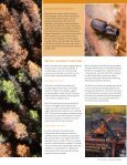 Mountain Pine Beetle - Naturally:wood - Page 2