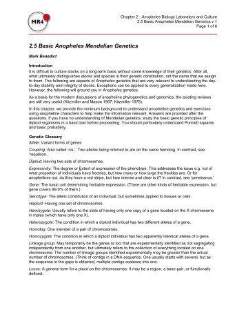 Basic Mendelian Genetics Worksheet: Using Manipulatives To Teach Basic Mendelian Genetics Concepts,