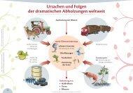 ursachen und Folgen der dramatischen abholzungen ... - Format-X