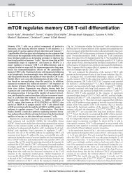 mTOR regulates memory CD8 T-cell differentiation - Immunology