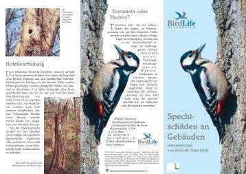 Spechtschäden an Gebäuden - BirdLife Österreich