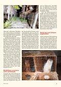 Heft 3 / 2013 - Tierschutz: Pro Tier - Page 5