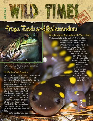 to download Frogs, Toads and Salamanders (PDF file, 560 KB)