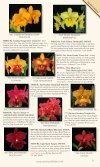 Carter and Holmes Orchids - Carter & Holmes Orchids - Page 3