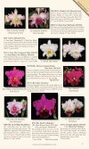 Carter and Holmes Orchids - Carter & Holmes Orchids - Page 5