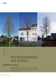 Winterkenmerken van bomen - Vereniging voor Openbaar Groen