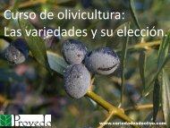 Curso de olivicultura. Las variedades del olivo