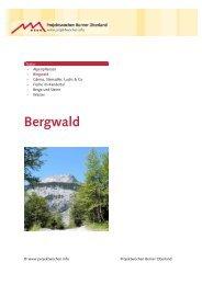 Bergwald - Projektwochen Berner Oberland