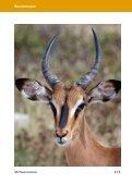 Jagdland Namibia: Wie hast Du Dich in 50 Jahren verändert! - Seite 5