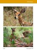 Jagdland Namibia: Wie hast Du Dich in 50 Jahren verändert! - Seite 6