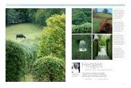 Hedges - Arne Maynard Garden Design
