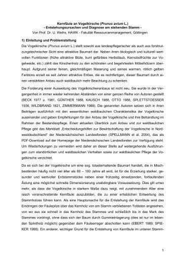 1 Kernfäule an Vogelkirsche (Prunus avium L ... - Baumgutachten