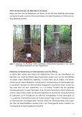 1 Kernfäule an Vogelkirsche (Prunus avium L ... - Baumgutachten - Seite 3