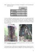 1 Kernfäule an Vogelkirsche (Prunus avium L ... - Baumgutachten - Seite 6