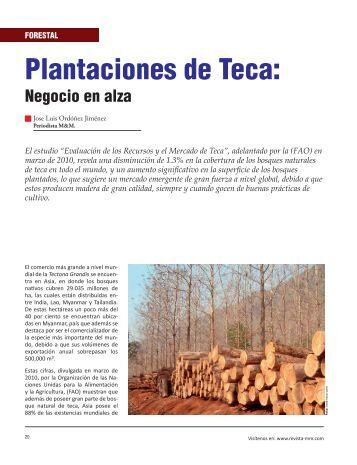 Forestal: Plantaciones de Teca - Revista El Mueble y La Madera