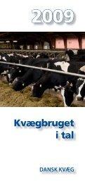 Kvægbruget i tal - Landbrug & Fødevarer