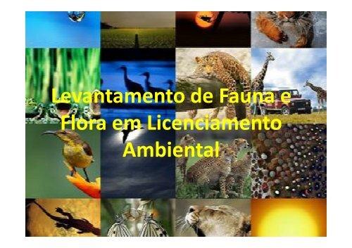 Levantamento de Fauna e Flora em Licenciamento Ambiental