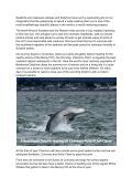 Seabirds-and-Cetaceans-Brochure - Page 2