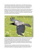Seabirds-and-Cetaceans-Brochure - Page 4