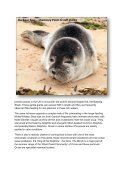 Seabirds-and-Cetaceans-Brochure - Page 5