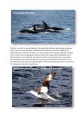 Seabirds-and-Cetaceans-Brochure - Page 6