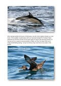 Seabirds-and-Cetaceans-Brochure - Page 7