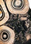 Muse um Prg 02_09_EXE:MusÈum Prg 02/06 EXE - Muséum d ... - Page 3