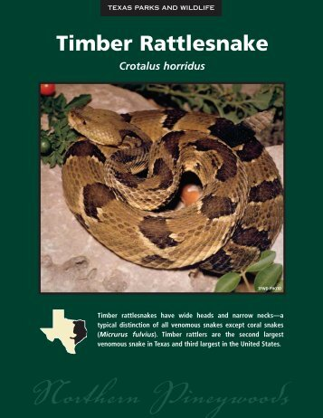 Timber Rattlesnake - The State of Water