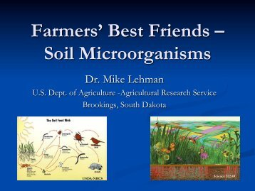 Farmers' Best Friends – Soil Microorganisms - Ontario Soil and Crop ...