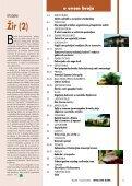 Kim (Carum carvi L.) - Hrvatske šume - Page 3