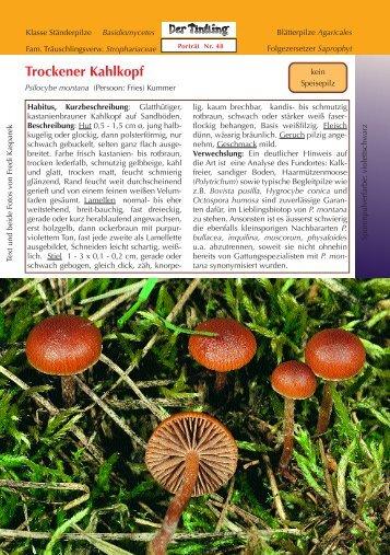 Trockener Kahlkopf Psilocybe montana - Tintling