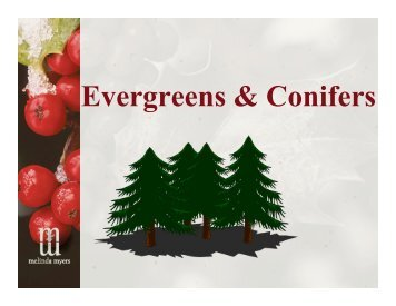 Evergreens & Conifers - Melinda Myers