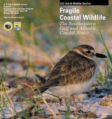 Fragile Coastal Wildlife