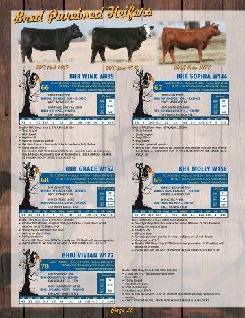 BHR WINK W099 - Buzzard Hollow Ranch