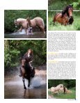 Cavaliere 32 - Pascal Lahure - Page 5