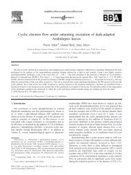 Cyclic electron flow under saturating excitation of dark-adapted ...