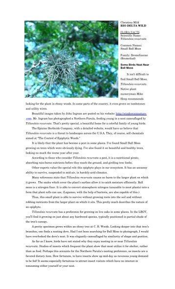 "Tillandsia recurvata - Christina Mild's ""Rio Delta Wild"""