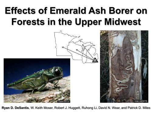 Effects of Emerald Ash Borer on Midwest and Northeast United ...