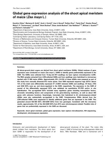 Global gene expression analysis of the shoot apical meristem of ...