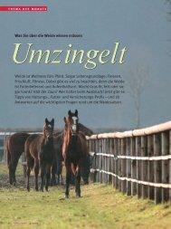 Umzingelt - Reiter Revue International