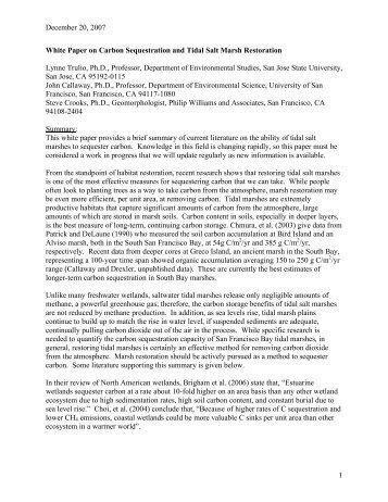 essay on carbon tax