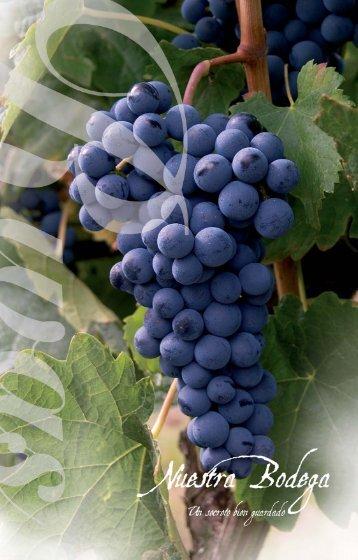 descargar carta de vinos en archivo PDF - Restaurante Rivas