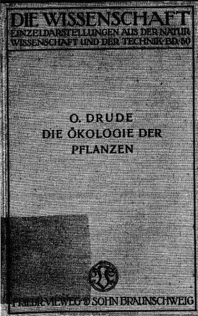 Alter historischer Druck Pflanzensystematik V Holzstich 1910 VI