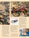 The Crayfish Collectors - Illinois DNR - Page 2