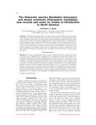 The Palearctic species Bembidion femoratum and Amara communis ...