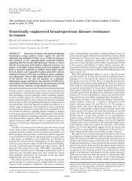 Genetically engineered broad-spectrum disease resistance in tomato