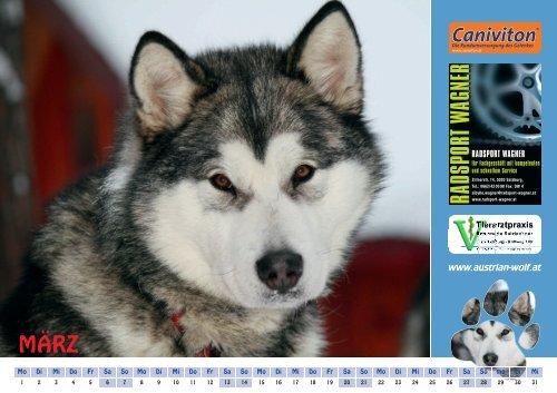 Alaskan Malamute Calendar