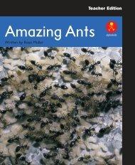 L17 TEpp Amazing Ants