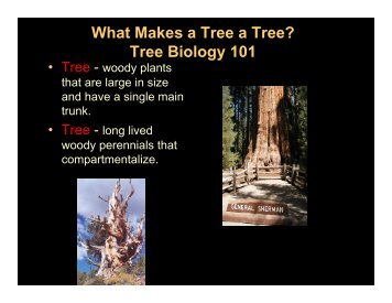 What Makes a Tree a Tree? Tree Biology 101 - Up